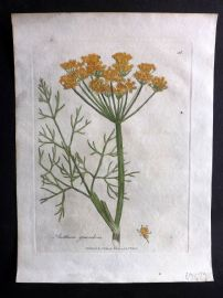 Woodville 1810 Hand Col Botanical Print. Anethum Graveolens. Dill 48
